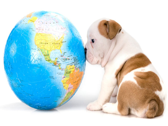 Options for Pet Import and Export Transport to and From Australia